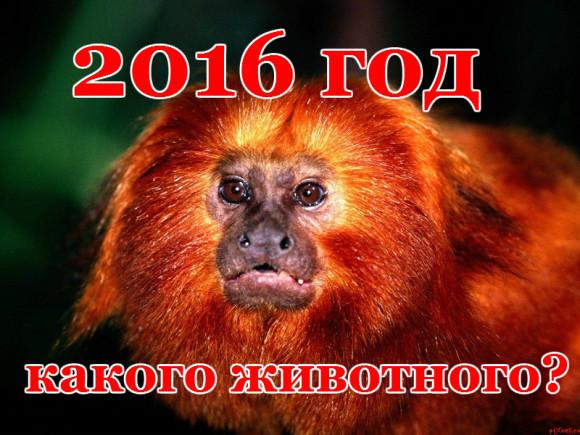 2016 год какого животного?